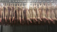 #goodfood How to Stop Cruel Factory Farming: Start with One Animal #foodie