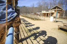 @ The Goat Shearing cowboys sit on the fence