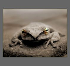 The Frog by ~shanghai1 on deviantART