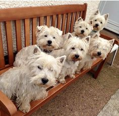 Back row. Brambles ( floppy ears). Thistle. Finn. Front row. Dougal. Maisie. and Hamish xXx .