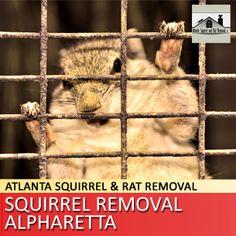 Squirrel Removal Alpharetta