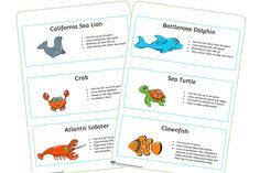 FREE Sea Animal Fact Cards Early Years (EYFS) Printable Resource — Little Owls Resources - FREE Nursery Practitioner, Under The Sea Animals, Early Years Teacher, Role Play Areas, Bird Barn, Owl Crafts, Animal Facts, Baby Owls, Eyfs