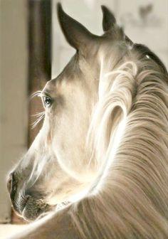 ❧ Couleur : Beige, ivoire ❧