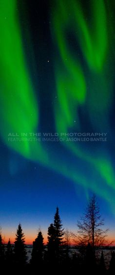 Canadian Wildlife Photographer Jason Leo Bantle Brings His Passion For Nature And Conserving Canadas Amazing Wild Spaces To Art