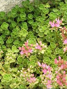 Ground cover ideas. http://media-cache6.pinterest.com/upload/52987733085883798_JKBxg72C_f.jpg cdotk gardening