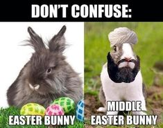New Happy Easter Meme Funny Easter Images Jokes funny messages 2018 Happy Easter Meme, Funny Easter Jokes, Funny Easter Bunny, Funny Bunnies, Funny Jokes, Hilarious, Happy Easter Funny Images, Funny Easter Pictures, Easter Bunny Images
