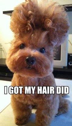 Got My Hair Did  Check out more funny pics at killthehydra.com