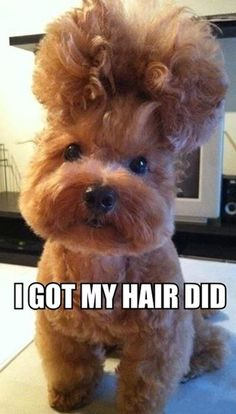 Got My Hair Did  Check out more funny pics at killthehydra.com @Rachel Bridgman thought of you and heard your laugh!!