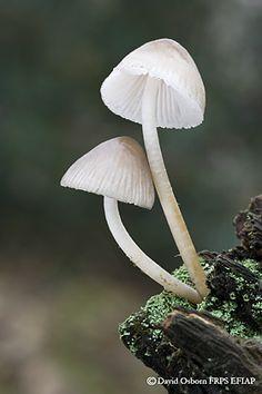 DAVID OSBORN NATURE PHOTOGRAPHY - Fungi - Gallery 1