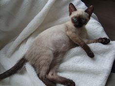 Hello world, hello kitty Bonny