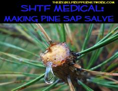 Making Pine Sap Salve: it can be used as a wound sealer like super glue and has antibacterial properties as well.