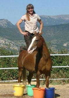 Zirkusschule Teil 2: Stillstehen & freies Rückwärtsrichten Philippe Karl, Video Stream, Author, Horses, Animals, Circus Show, Training, Horseback Riding, Animales