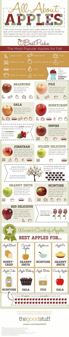 All About Apples ~ The Best Types of Apples For Your Recipes