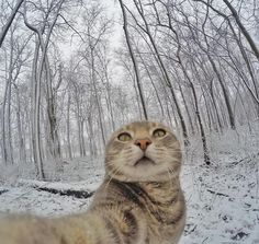 When your cat lends an ear...   #selfiecat #gopro by yoremahm