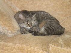 MY CAT, LUCKY. :)
