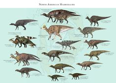 North American Hadrosaurs by PaleoGuy on DeviantArt