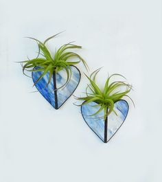 Stained glass Sconce Air Plant Holder  Blue stripe by glassetc,