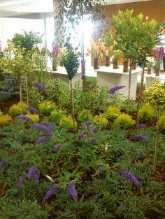 FLORA Aquarium, Flora, Plants, Aquarius, Fish Tank, Plant, Planting
