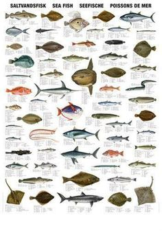 Saltwater fish chart with 60 of the most common sea fish. Animals Name In English, Salmon Species, Goldfish Types, Fish Chart, Oscar Fish, Fish List, Fishing Uk, Kunst Poster, Salt Water Fish