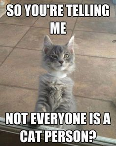 If you don't like Cats, we probably can't be Friends - Just Saying!