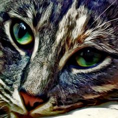 Nothing like a tabby! Feline Face Photograph by David G Paul