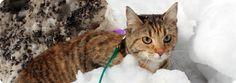 Kadotitko/löysitkö kissan? http://www.kissojenkatastrofiyhdistys.net/?page_id=64