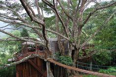 ร้านกาแฟบนต้นไม้ และที่พักวิวสวย เดอะ ไจแอนท์ เชียงใหม่ (The Giant Chian...
