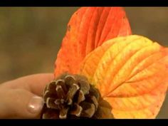 Why leaves change colors, explained by kids for kids
