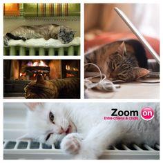 Quand nos animaux ont sommeil, ils ont cette formidable capacité à s'endormir partout. Et vous, vos animaux, où s'endorment-ils ?