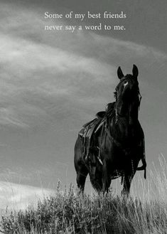Horse Quotes & Inspiration <3