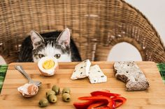 What can cats not eat? - For cats poisonous and unlikely life - Katzen Ernähru. Cat Allergies, Son Chat, Carnivore, Old Cats, Mundo Animal, Home Food, Cat Facts, Cat Health, Litter Box