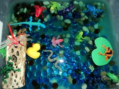 Pond life sensory