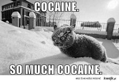 cocaine cat