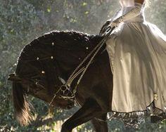 Bride Riding a Black Friesian. Zebras, Cavalo Wallpaper, Prince Charmant, Ange Demon, Friesian, Horse Love, Story Inspiration, Beautiful Horses, Enchanted