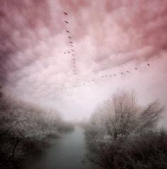 Grey with Pink Robert Frank, Pink Love, Pink Grey, Ash Grey, Gris Rose, Color Shades, 50 Shades, Color Rosa, Man Photo