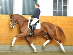 I would give pretty much ANYTHING for a horse. Even one this color. In my eyes they're all gorgeous
