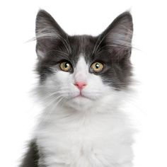What you'll need to know to keep your companion feline happy and ... - Know how to taje care of cats at Catsincare.com!