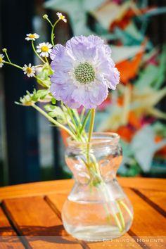 Lila anemoon, prachtige romatische bloem ter decoratie bij bijvoorbeeld een tuinbruiloft.
