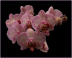 https://flic.kr/p/RBxfui | ORCHIDS | orchid