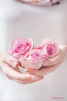 Pink roses ❤
