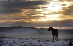 UK snow: Lovely photos of winter weather around Belfast, Northern Ireland Belfast Northern Ireland, Britain, Celtic, Sunrise, Scenery, Weather, Snow, Horses, Nature