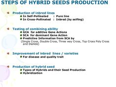 STEPS OF HYBRID SEEDS PRODUCTION Production of inbred lines In Self-Pollinated : Pure line In Cross-Pollinated : Inbred (b...