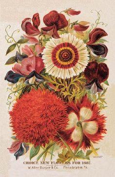 "wasbella102: ""Vintage Seed Catalogue - 1887 """