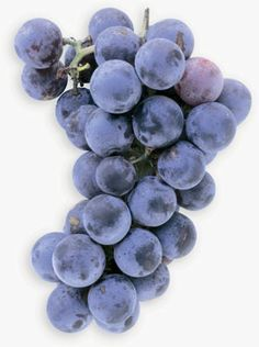 Natural Healing: Improve Heart Health with Concord Grapes