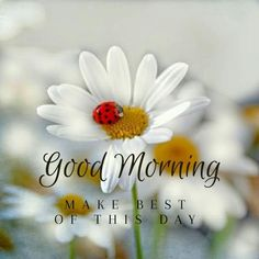 Latest good morning images with flowers ~ WhatsApp DP, Love DP, DP Images, WhatsApp DP For Girls Cute Good Morning, Good Morning Picture, Good Morning Messages, Good Morning Greetings, Good Morning Wishes, Good Day Images, Good Morning Images Flowers, Latest Good Morning Images, Morning Quotes Images