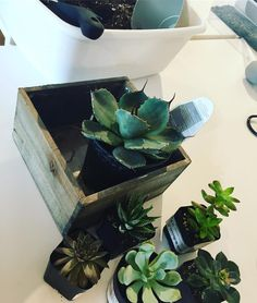 """24 Likes, 3 Comments - @stylebystefani on Instagram: """"Succulent Saturday! Chilling at my favorite new hangout learning how to plant succulents. 🌵…"""""""