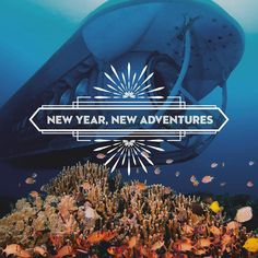 Get your fill of blues in 2017!   Book your new adventure now: http://ift.tt/2jNd3nH
