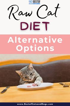 If you Are Looking for An Alternative Options To A Raw Cat Diet, But Still Want To feed Your Cat An Optimum Diet. Other beneficial Options Include... Read More Here! #RawCatFood #RawDietCatFood #CatFood