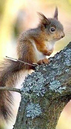 Beautiful baby squirrel!
