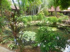 Array of tropical plants around  a small pond